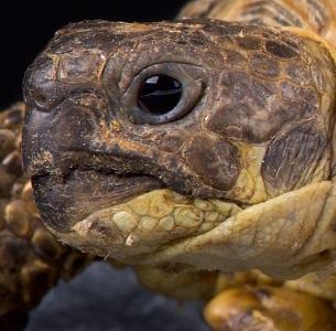 Las tortugas escuchan