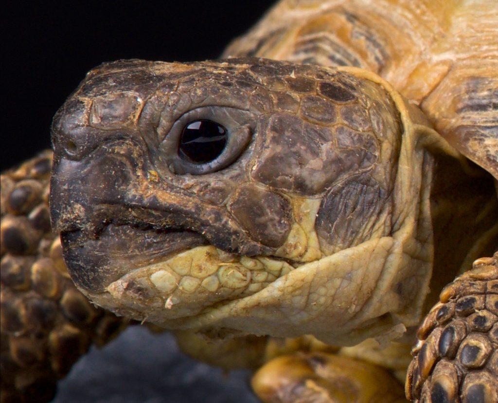 las tortugas escuchan imagen cabeza