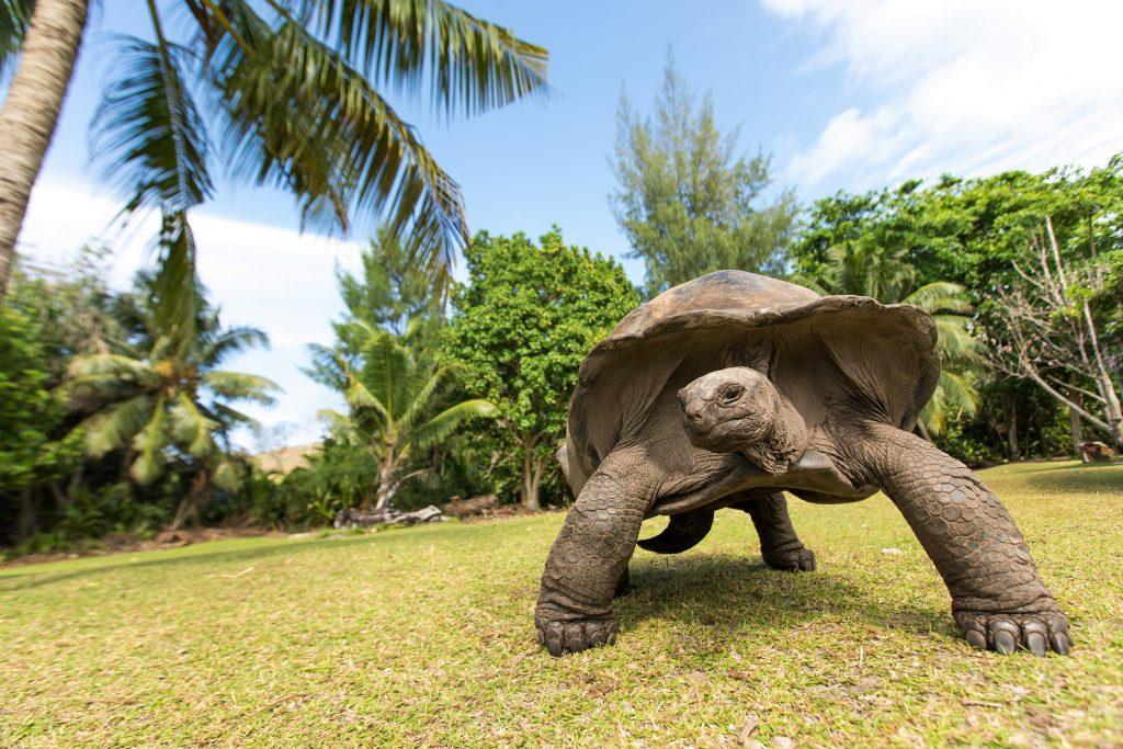 segunda tortuga terrestres más grande del mundo
