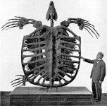 ¿Cuál es la tortuga más grande del mundo?