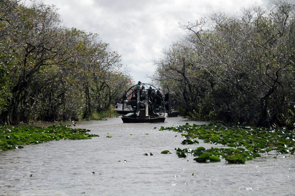 habitát caimán del mississippi en Everglades