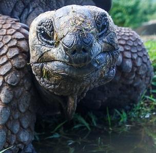 ¿ Por qué viven tantos años las tortugas ?