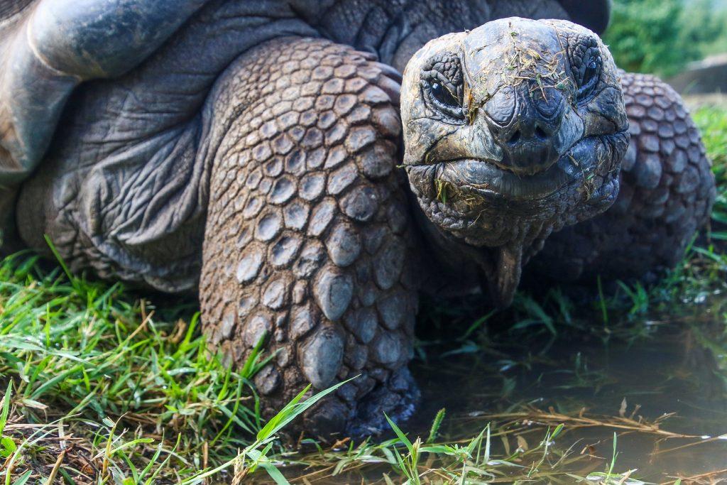 por que las tortugas viven tantos años