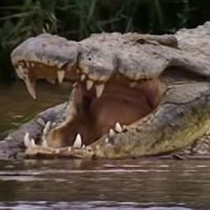 Gustave, el cocodrilo asesino de Burundi
